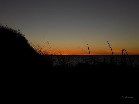 dune-in-wind