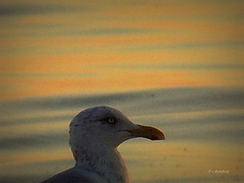 filtered-sea-gull-on-shore
