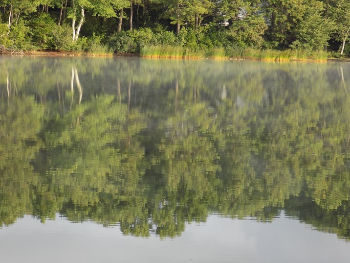 Reflections of a Shore Line