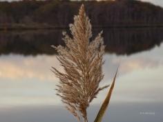 fall-flourish