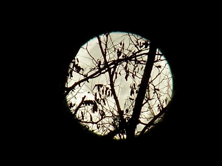 super-moon-branches