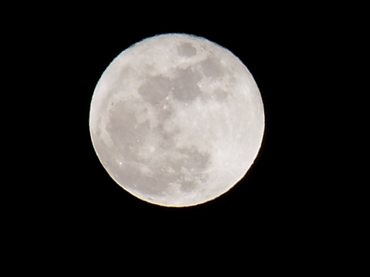 wolf-moon-1