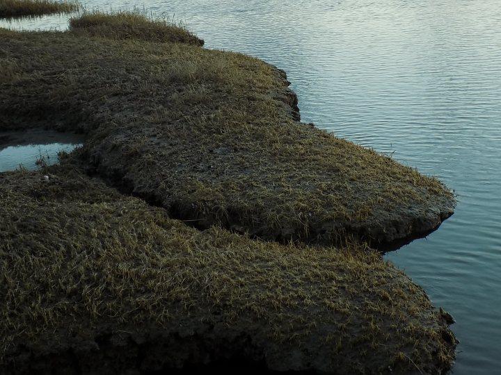 Edge of Winter Marsh