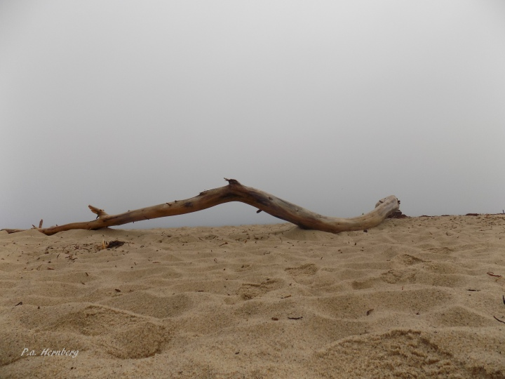 70217 Driftwood on a Foggy Shore