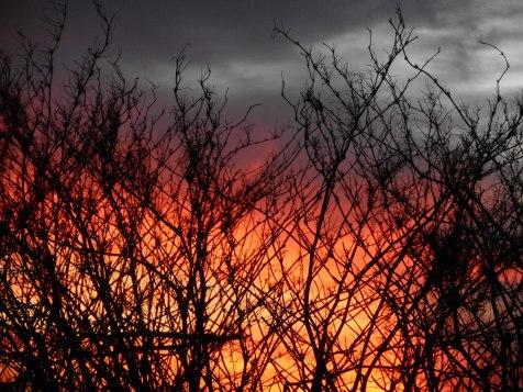 012018 Burning Bush