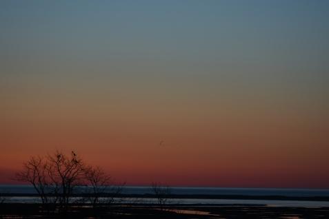 042218 Birds Waiting for the Sun