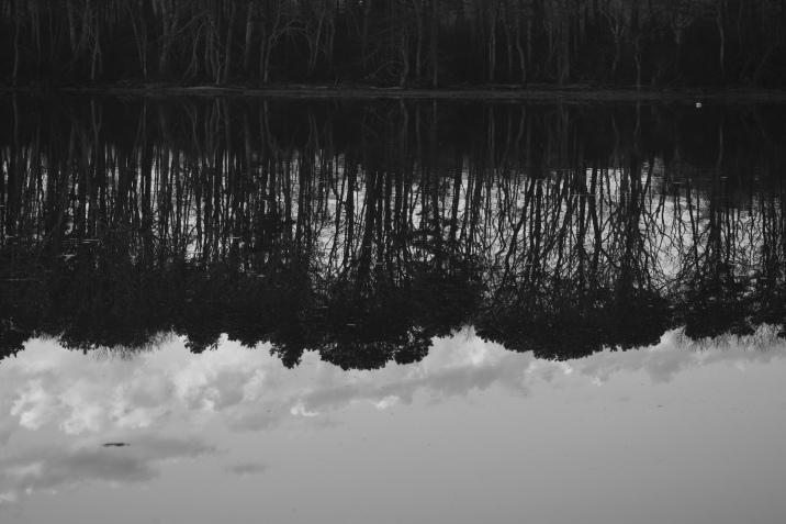 042918 B&W Reflection of trees